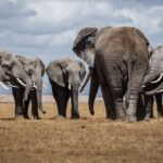Wildlife: Did you know Sex In Elephants