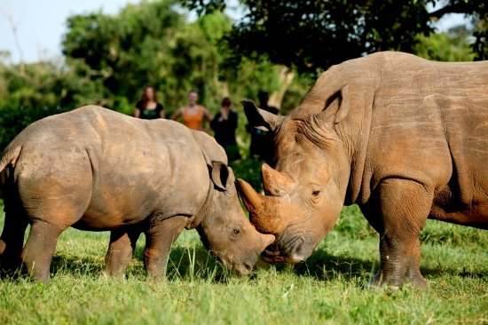 What You Should Know About Ziwa Rhino Sanctuary